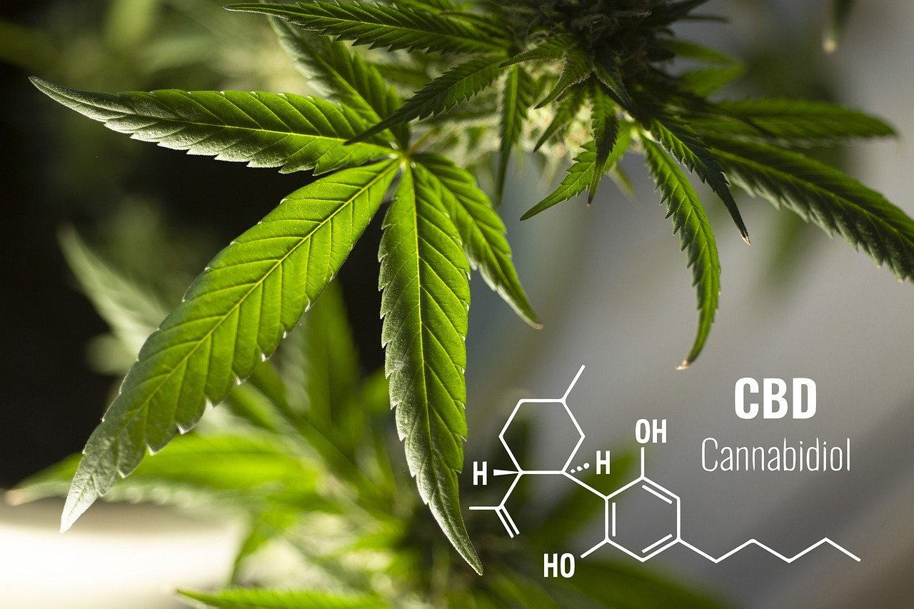 Cannabis et CBD : tout comprendre sur les terpènes